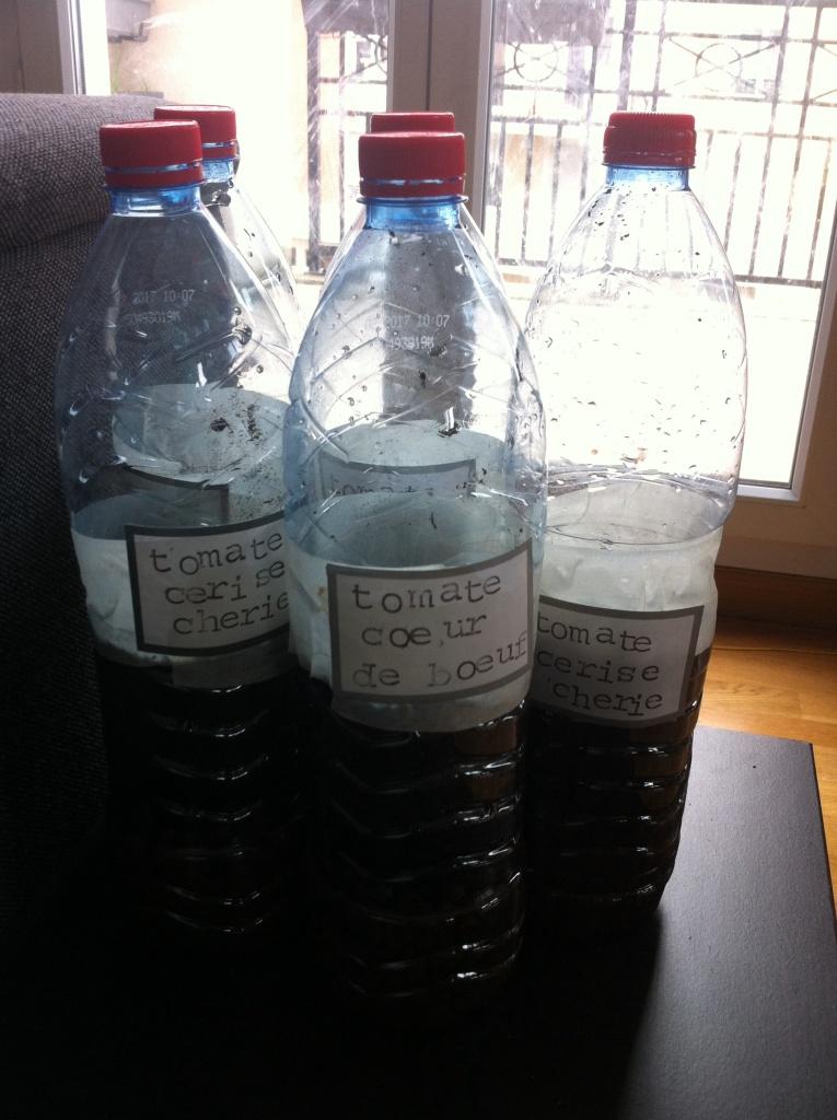 Nouvelle méthode pour mon semis de tomate en bouteille, étape 4 : placer les bouteilles dans une serre, ou près d'une baie vitrée