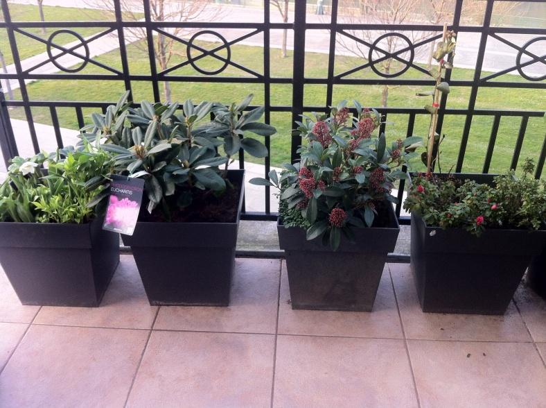Mes plantes d'ombre
