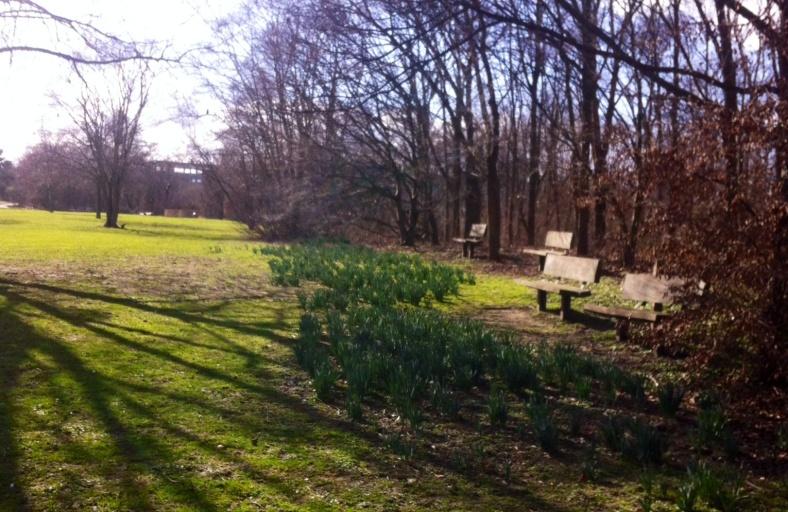 Bancs entre pelouse verdoyante, narcisses prêts à éclore, et sous bois