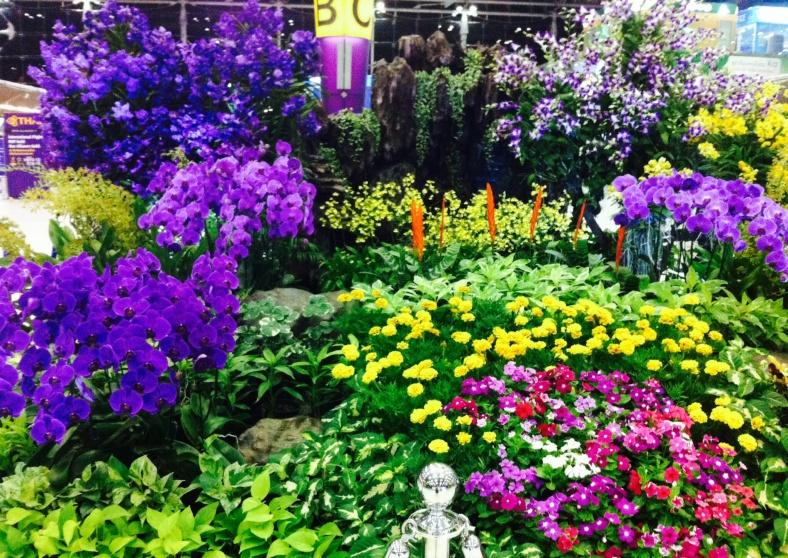 orchidées multicolores à l'aéroport de Bangkok