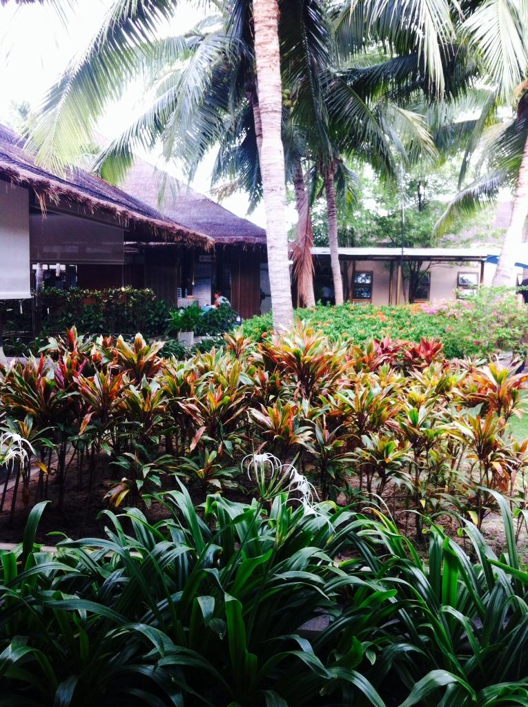 plantes aux feuilles couleurs chaudes, à l'aéroport de Koh Samui