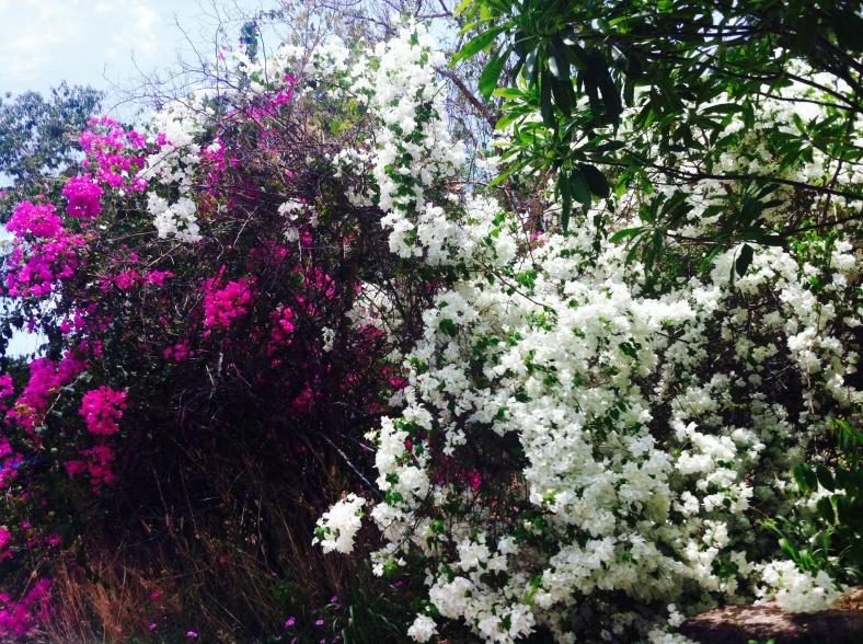 Fleurs violet et blanc abondantes