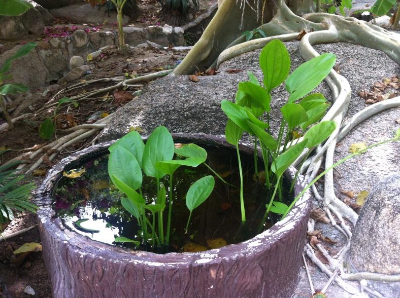 Feuillage élégant pour un bassin minuscule
