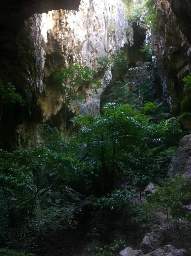 Végétation survivant dans une grotte où la lumière et l'eau de pluie viennent rarement
