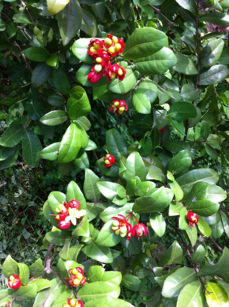 Fleurs rouges en petite boule