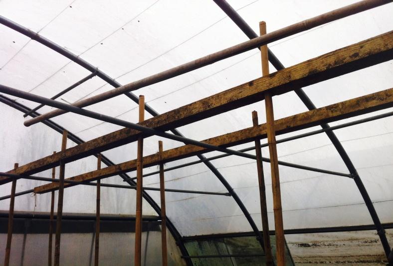 Pour planter des tomates sous serre, notre prof jardinier a fabriqué cet alignement de tuteurs en quinconce solidifié verticalement, les uns aux autres en deux rangées (il faut de la place...)
