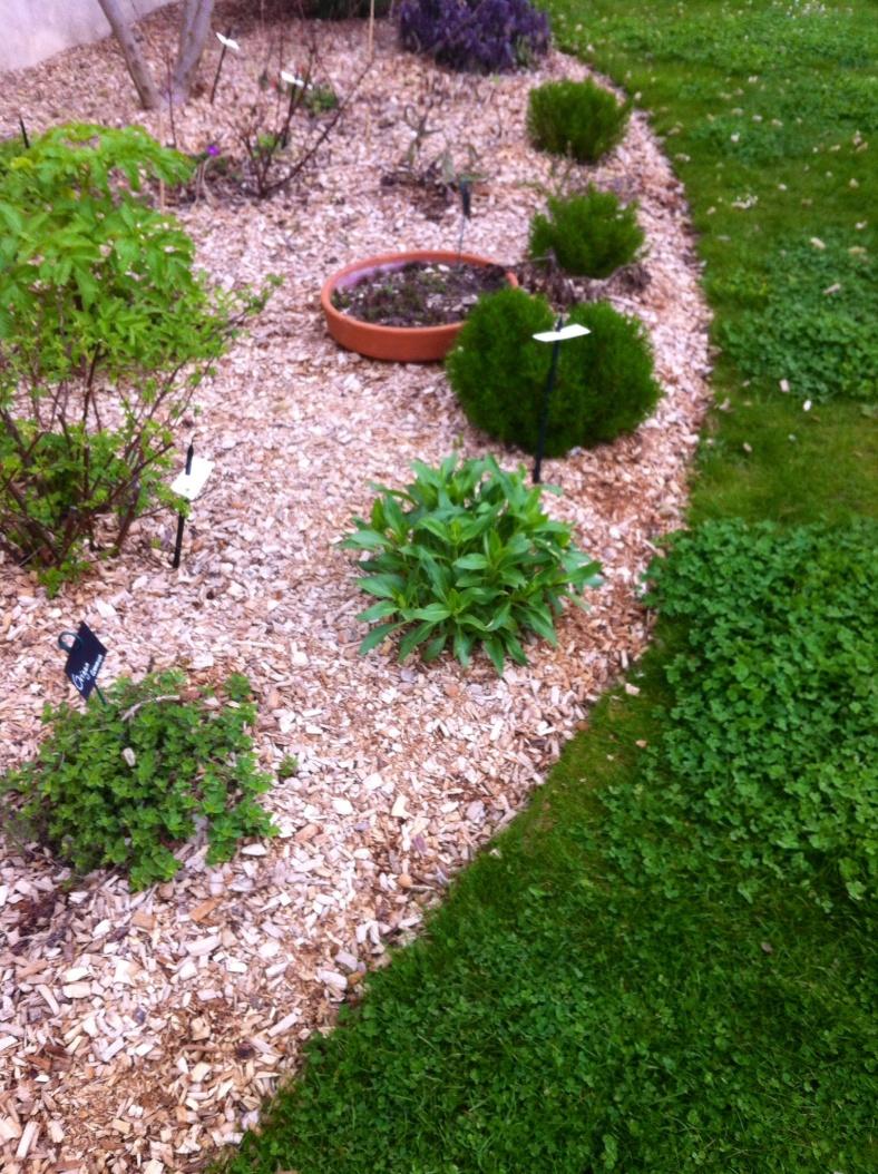 """Coin herbes aromatiques, travaillé comme un massif un peu plus haut que le reste du potager, recouvert de paillis BRF (Bois Raméal Fragmenté) que notre prof jardinier nous recommande pour des cultures qui restent """"en place"""" d'une année sur l'autre, et donc aussi pour les vivaces"""