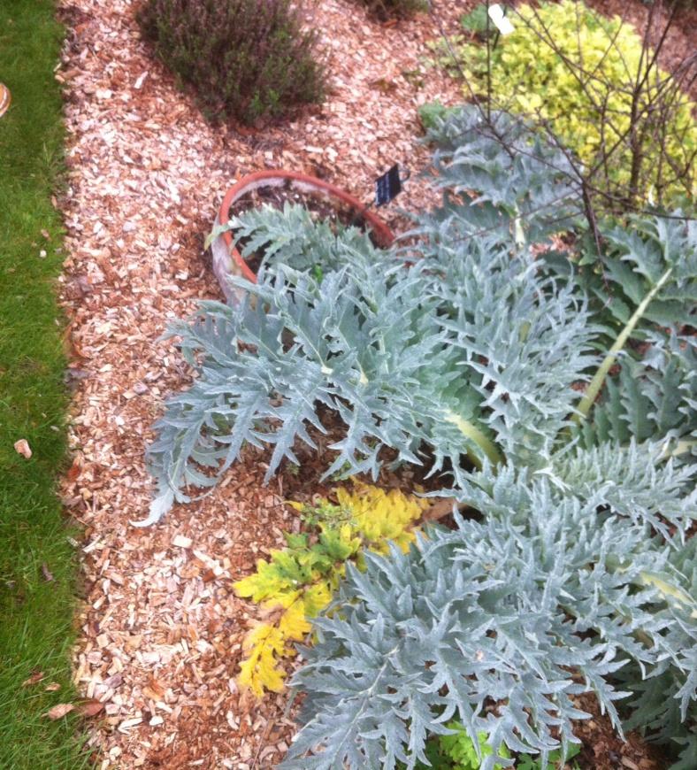 Ca je ne suis pas sûre de pouvoir en planter dans ma jardinière, trop volumineux