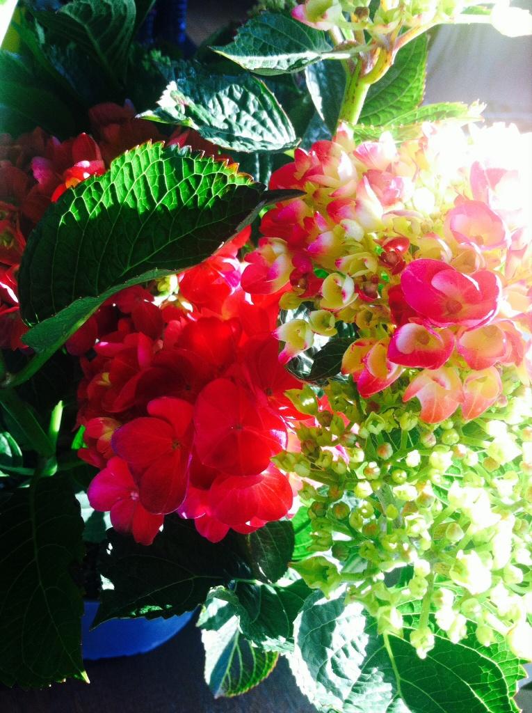 La couleur d'un rose fushia soutenu et flashy
