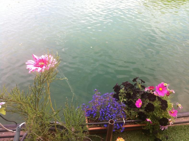 Marguerite rose et jolies fleurs en bord de Seine