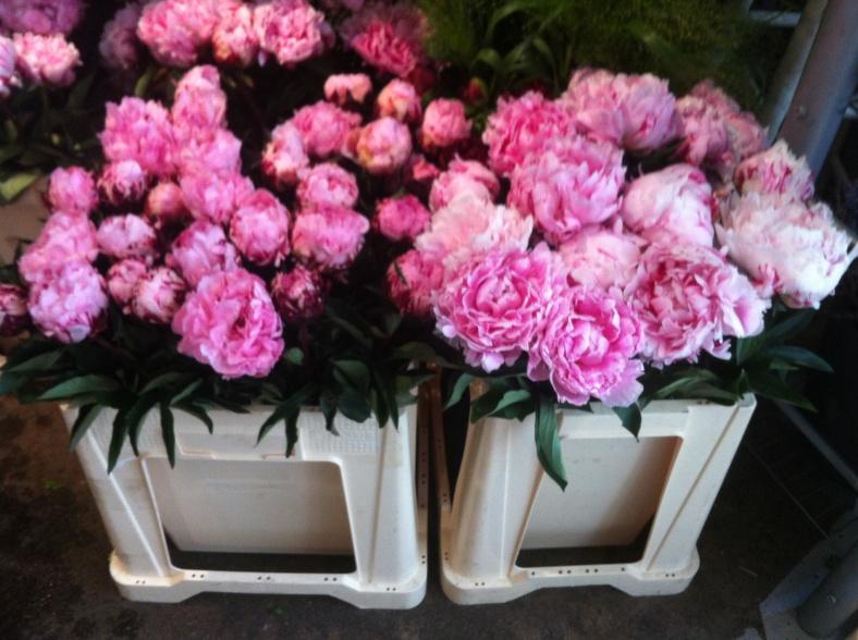 Des bouquets de pivoines : so romantic