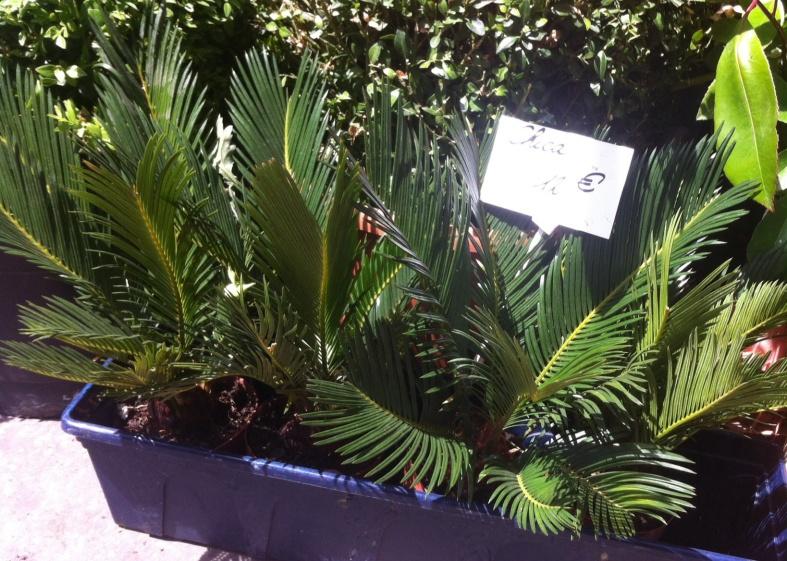 """Ca me donne envie de prendre quelques """"mini palmiers"""", 12€ seulement, est-ce cher ?"""
