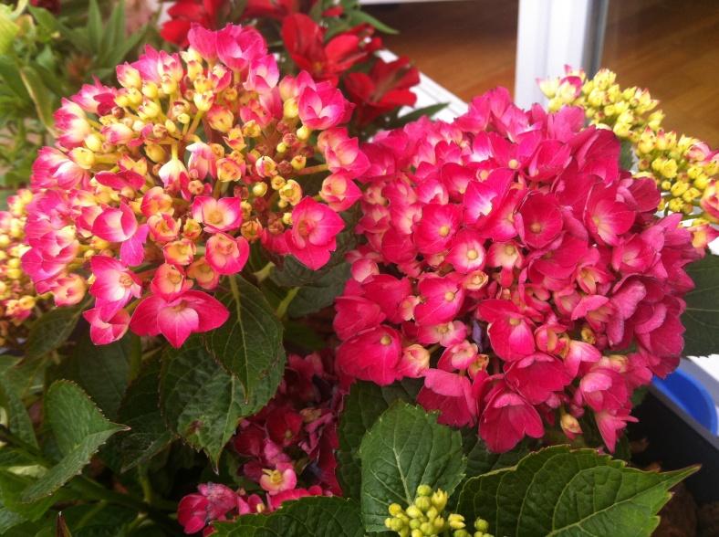 Là on perçoit le rose fushia :)