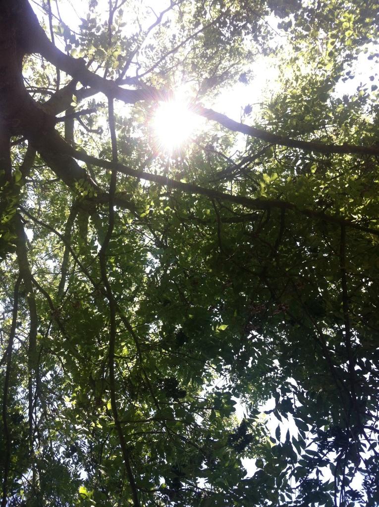Pique-nique sous les arbres, Ile Saint Denis, 93