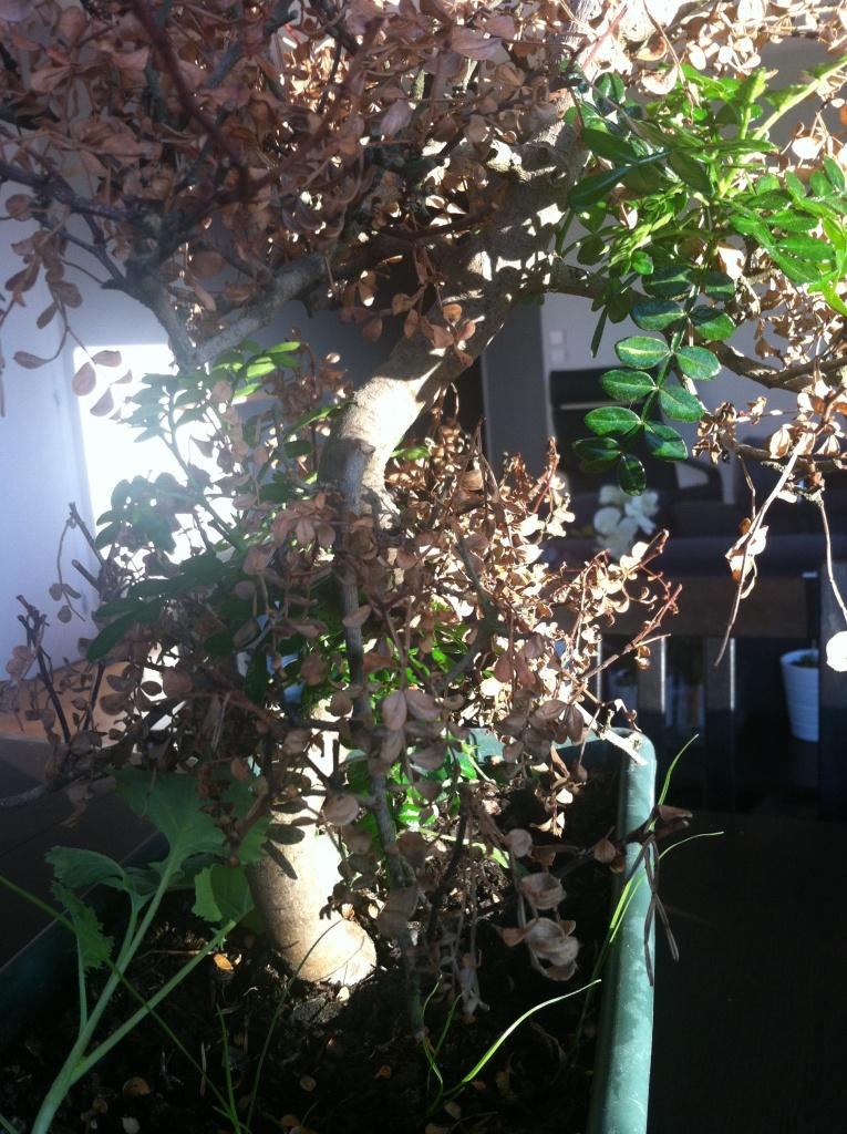 La lumière passe à travers les branches quasiment mortes