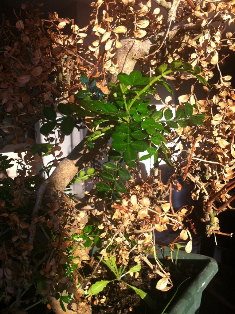 Une mini touche de verdure perce la lumière