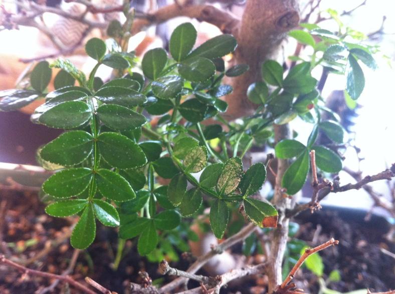 On ne voit plus que les nouvelles branches vertes et fraîches