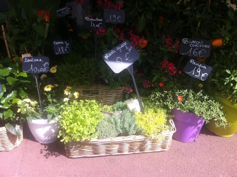 Panier de plantes grasses, 8€