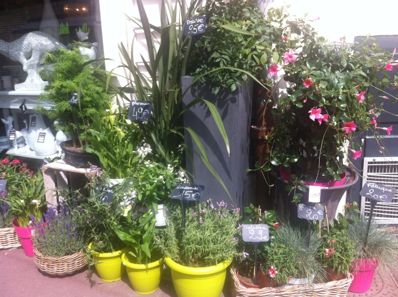 Diverses plantes en pots, plus grandes, de 10€ à 49€