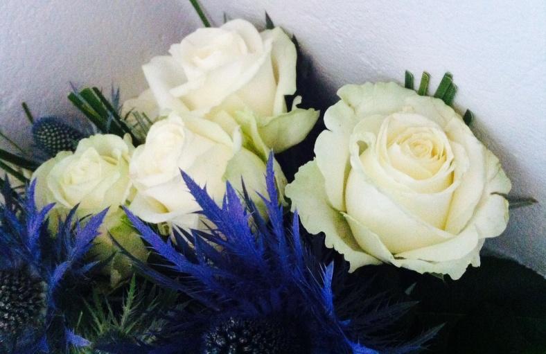 Roses blanches, soulignées de bleu
