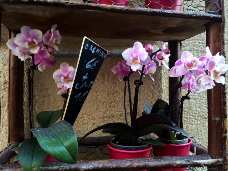 Mini orchidée dans les teintes roses que j'affectionne