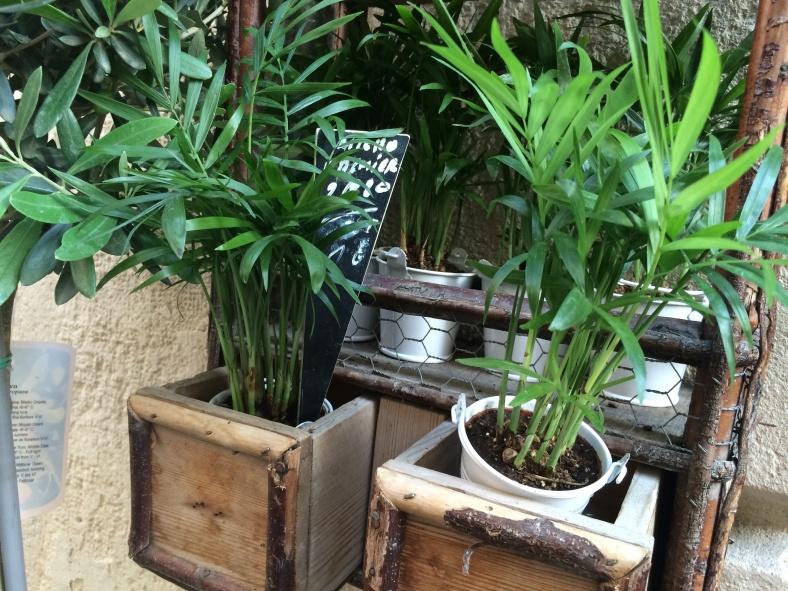 Atypique, entre palmier et plante verte d'intérieur