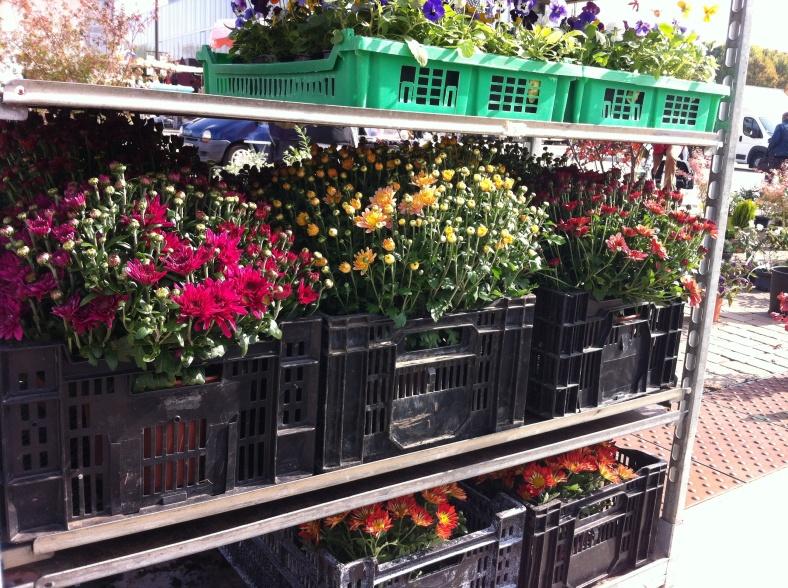 Marché aux fleurs, sur la petite place en face de la Cathédrale Saint Julien